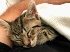 Baby kitty